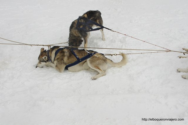 Perros en Vallnord Andorra