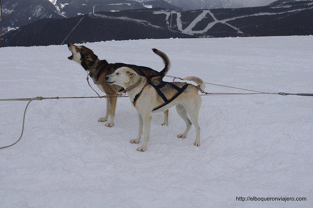 Trineo con perros en Vallnord Andorra