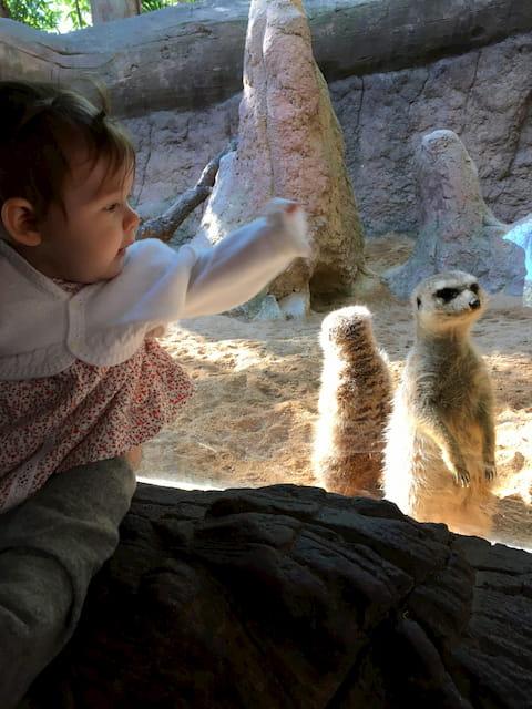 Paula saludando a los animales en Bioparc Fuengirola