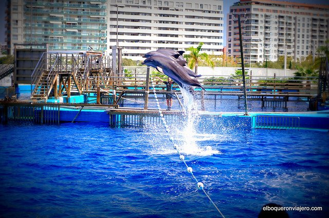 Oceanographic of Valencia : You will fall in love with the dolphins