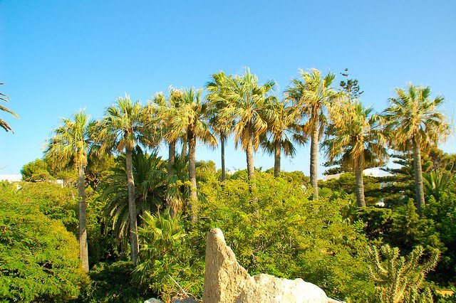 Parque Genoves, Cadiz