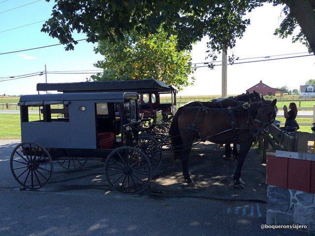 Aaron & Jessica Buggy Rides en Lancaster PA