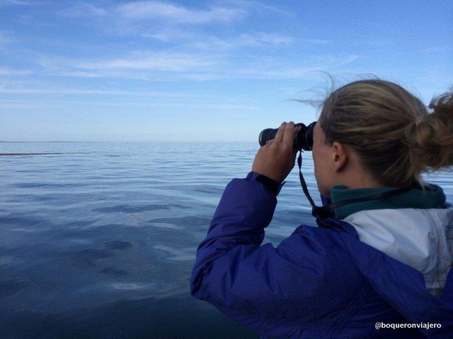 Abby viendo ballenas en Maine