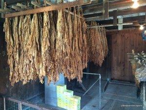 Fábrica de puros en Amish Farm and House en Lacaster PA