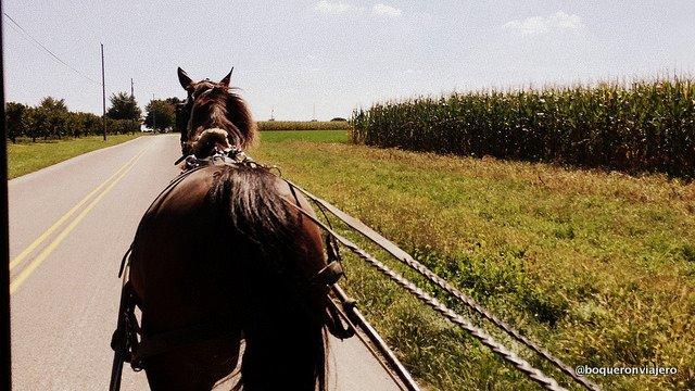 Paseando por las granjas Amish