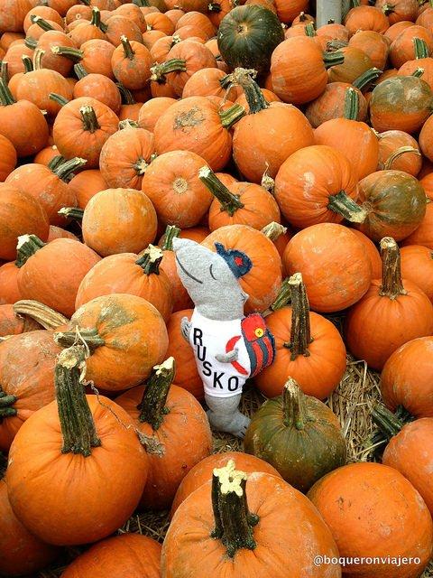 Rusko en Pumpkinland, Pennsylvania