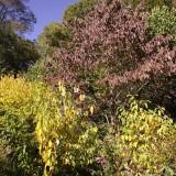 Central Park en otoño, multitud de colores y rincones para perderse