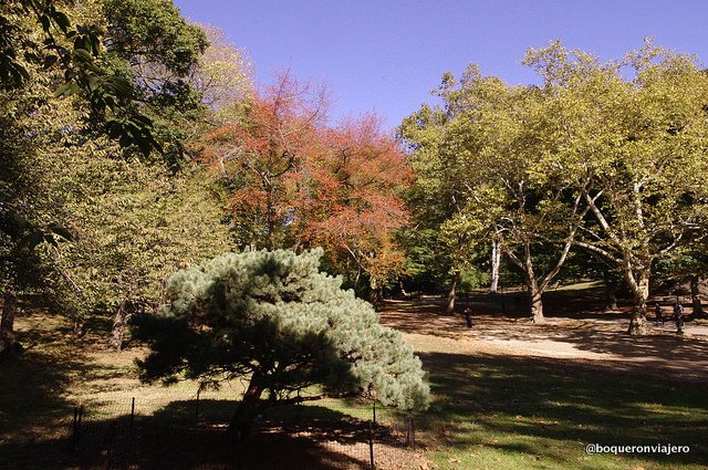 Different colored leaves in Central Park
