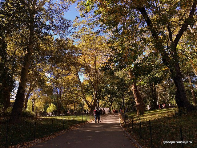 A path in Central Park
