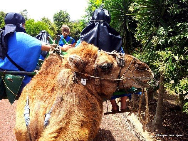 Camello Center en el Tanque, Tenerife