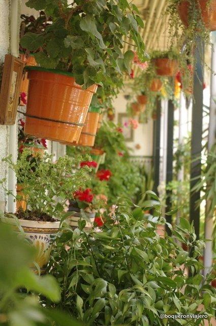Flower pots in a patio in Málaga