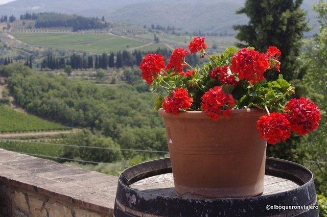 Azzienda Il Palagio, Panzano en Chianti