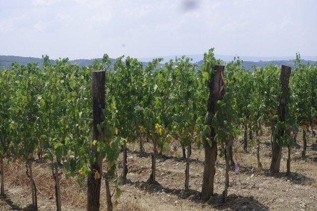 Los viñedos de Il Palagio Panzano