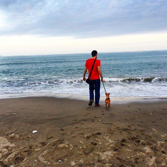 Pedro y Dino en la playa
