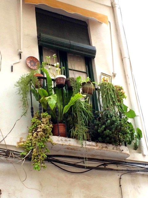 Balcón lleno de plantas en El Perchel, Málaga