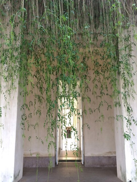 Enredaderas colgadas en el patio del CAAC Sevilla