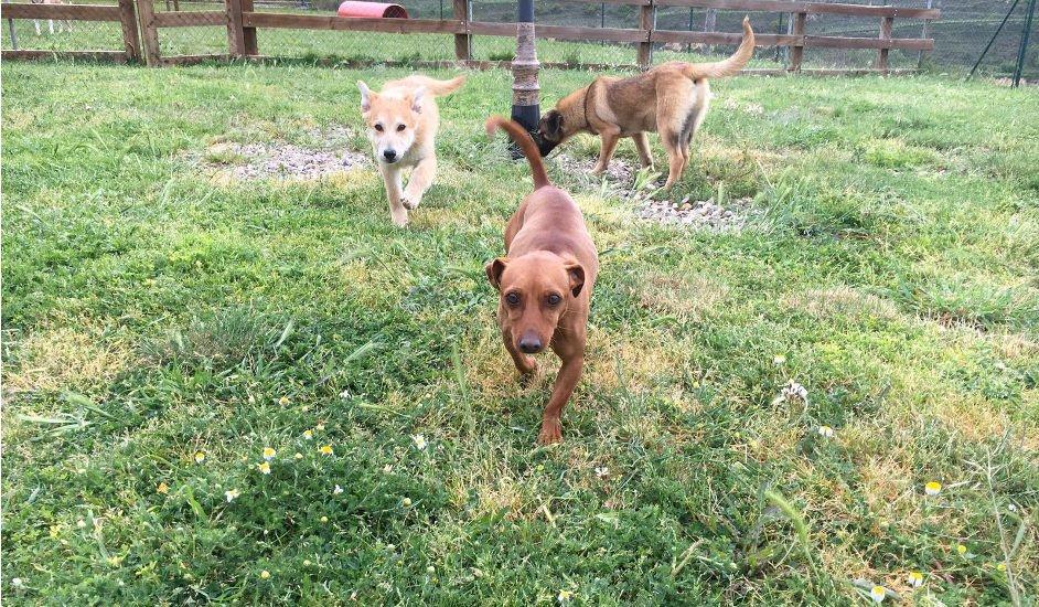 Residencia Canina La Burra Lola, un hotel para perros donde Dino encontró felicidad