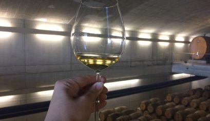 01-Probando-un-vino-blanco-en-Bodegas-Baigorri-visita-Enobus