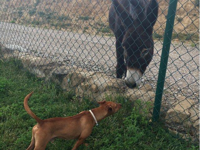 Dino meets Lola the donkey
