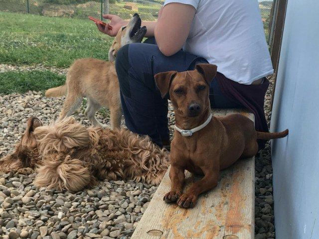 Dino descansa en la Residencia Canina La Burra Lola