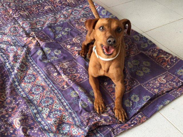 Dino está muy relajado tras un masaje con aceite de lavanda en La Burra Lola