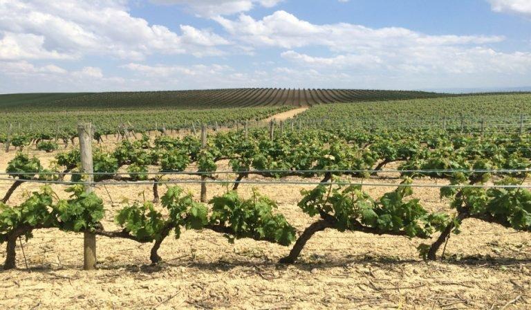 Viñas en La Rioja Alavesa con Thabuca Wine Tours