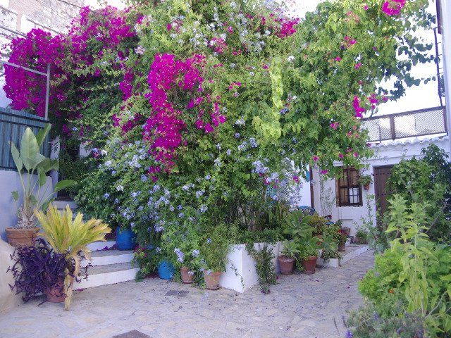 The beautiful flowers at this house in Salobreña