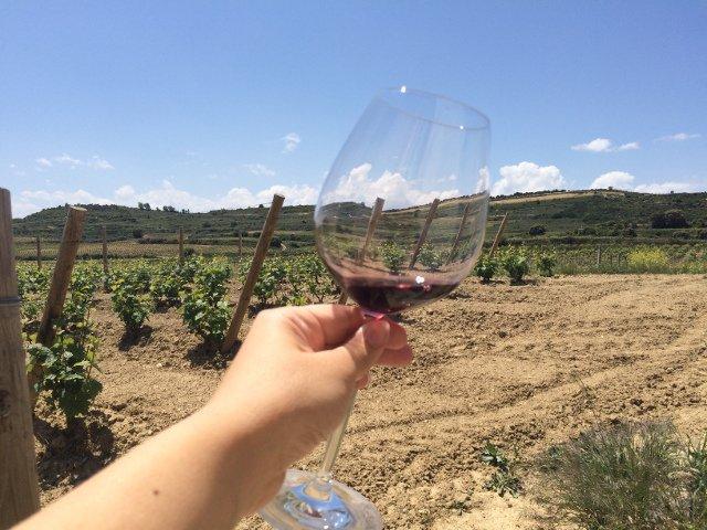 Catando vinos con Thabuca Wine Tours