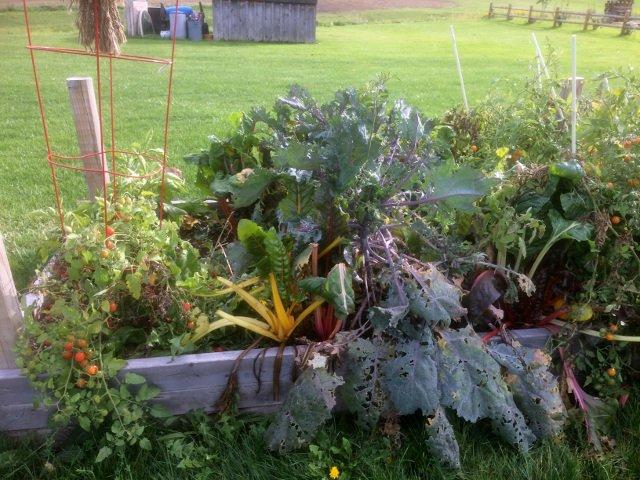 Vegetable garden at Barnstormer Winery
