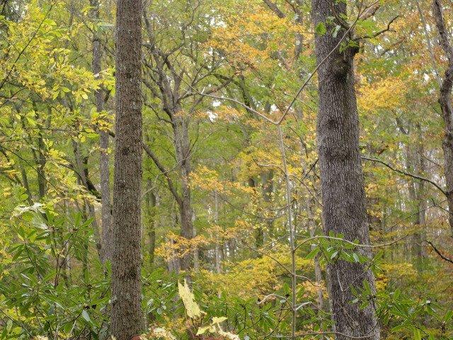 Bosque cerca de La Casa de la Cascada, Pennsylvania