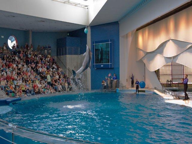Delfines actuando en el acuario de Baltimore