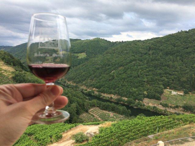 Galicia, tierra de magníficos vinos