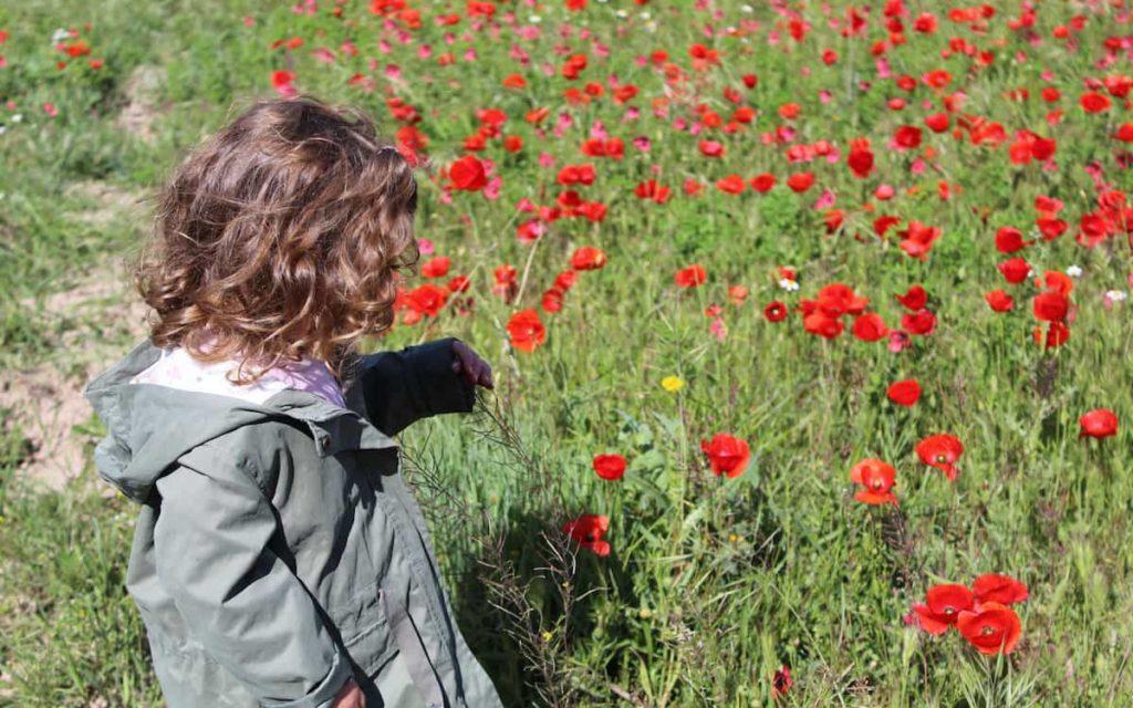Paula en el campo de amapolas de Chelva