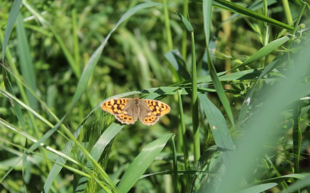 Mariposas en la naturaleza de Chelva